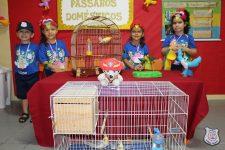 feira-ciencias-educ-infantil-clt-2019-065